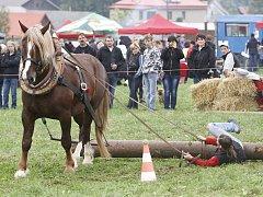 Chovatelé a přátelé koní se setkali v Hamrech u Hlinska.