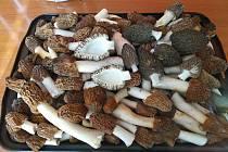 Z půdy se vyklubaly chutné jarní houby