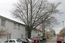 Strom ohrožující budovu záchranky.