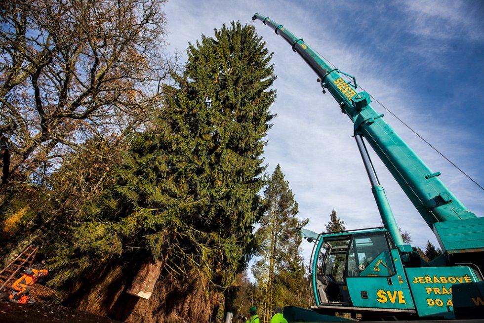 Kácení peckovského stromu pro vánoční Prahu.