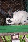 Obdivujte krasavce mezi králíky, holuby a kohouty