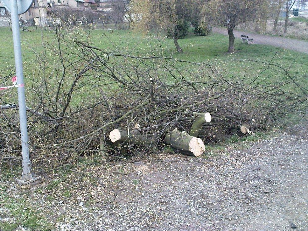 Strom pokácený v ulici Na Tobolce.
