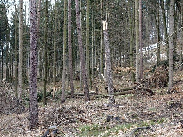 Lesy v Prachovských skalách po kalamitě.