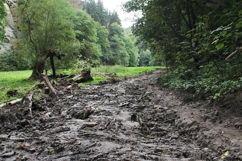 Hluboké koleje jsou sice zahlazené, ale na některých místech stejně zůstávají desítky centimetrů hluboké díry. Po těžbě zbylo v údolí spousta bláta a hromady suchých větví.