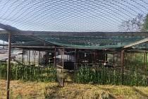 Celý chov bažatnice u Mlázovic na Jičínsku, tedy asi 1000 kusů bažantů, uhynul při jejím nedělním požáru.