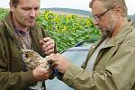 Ornitologové kroužkovali ptáky u rybníka Zrcadlo v Mlýnci.