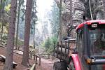 Stromy v Prachovských skalách jsou napadné kůrovcem.
