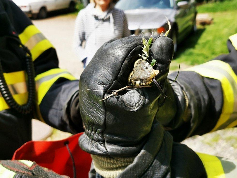 Hasiči pomohli s odchytem hada v Chomuticích.