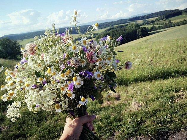 Marie Novotná vidí krásu vkaždém snítku trávy.