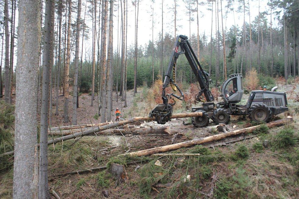 Kůrovcem poškozené lesy.