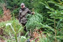 Vyřezávání vánočních stromků členy správy KRNAPu.