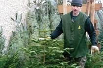 Jeden z prodejců stromků přijel až z Brna.