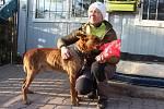 Jičínský psí útulek, kam byl umístěn týraný pes ze Sběři na Jičínsku.