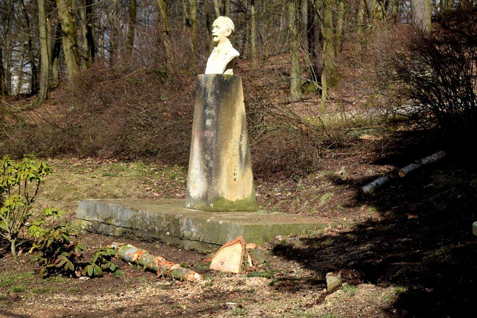 Z lesoparku zmizely přerostlé smrky