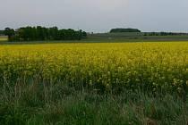Řepkové pole u Petroviček na Jičínsku.