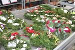 Zahradní centrum na Novopacku už zahájilo prodej vánočních stromků české produkce. Nabídka je pestrá od smrků, jedliček, boroviček, stříbrných smrčků po stromky v květináči.