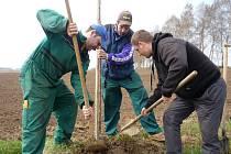 Sázení stromů v Nemyčevsi.