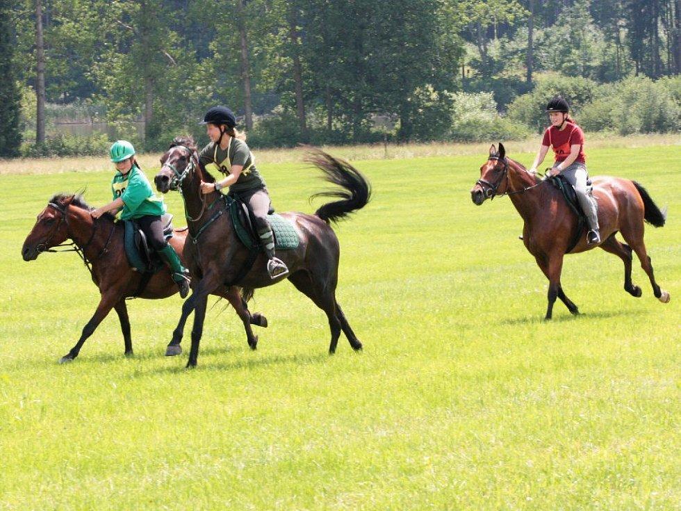 Z bělohradského vytrvalostního závodu koní.