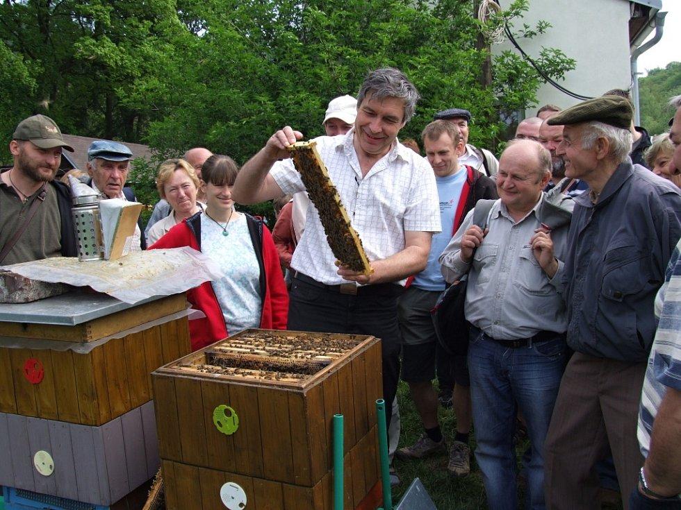 """Včelaři ZO Lázně Bělohrad a ZO Hořice na návštěvě VÚ včelařského v Dole 30. 4. 2011. Pracovník ústavu včelařského Ing. Dalibor Titěra ukazuje včelařům """"hodné"""" včely na plástu."""