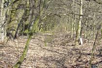 Jičín - pozemek pro obnovení u Dvoreckého rybníka