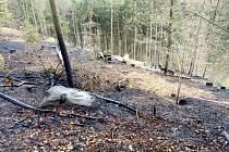 Požár lesního porostu na Zámostí.