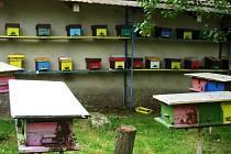 Včelaři na návštěvě u chovatele včelích matek Jiřího Strnada ve Štíhlicích u Českého Brodu.