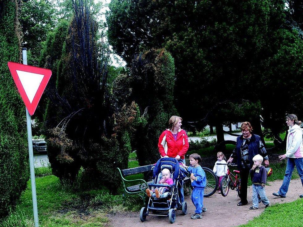 Ohořelá túje v bělohradském parku