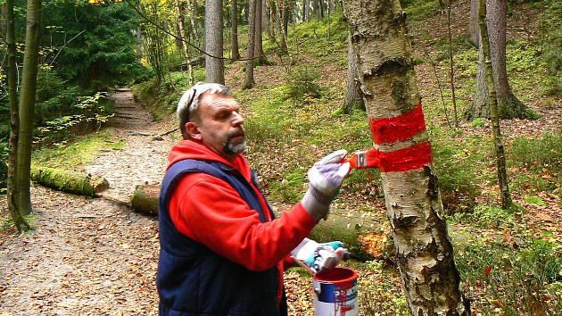 Strážci lesa v přírodní rezervaci Prachovských skal - na snímku dobrovolný strážce Miloš Zeman.