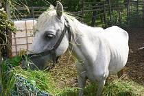 V Češově žijí na třech místech v obci vyhladovělí koně.