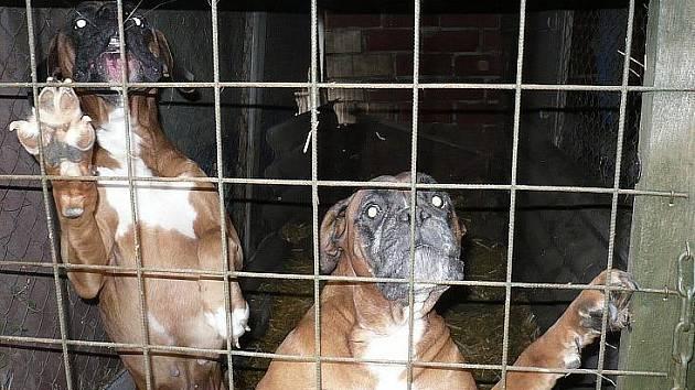 V nepřijatelných podmínkách žilo 32 psů a tři kočky.