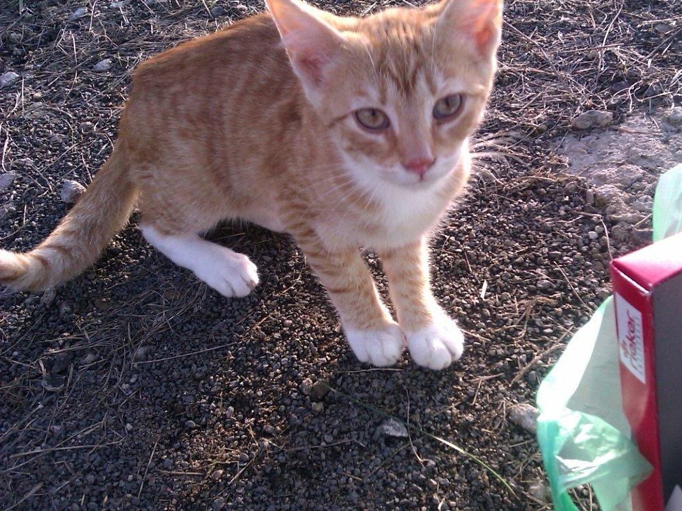 Jedna z toulavých kočiček, které potřebují pomoc.