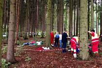 U obce Libín zaútočili sršni na orientační běžce.