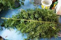 Marihuanu sklidili policisté