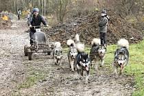 Závody psích spřežení pod Zebínem.