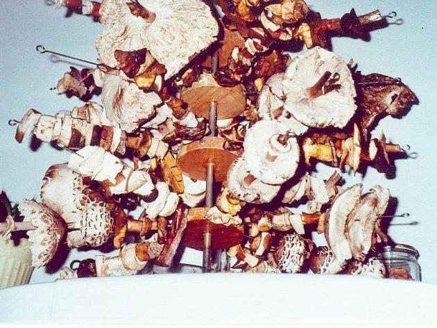 Vánočních stromků je bezpočet, avšak takový vánoční houbový stromeček z usušených hub stojí za zhlédnutí.