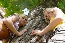 Strom stojící před základní školou naproti kinu je dominantou travnatého prostoru. Bohužel ho napadla houba, a tak se dostal na seznam špatných dřevin. Jak to s ním dopadne, posoudí odborníci, ale Sabina a Lucka (zleva) z Jičína by ho určitě nekácely.