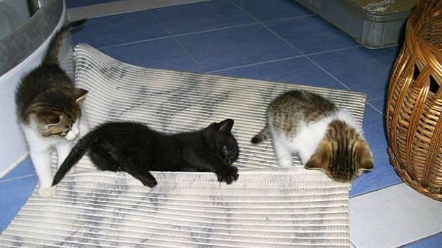 Roztomilá koťata - chcete některé?