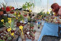 Výstava kaktusů a sukulentů na Valdštejnově náměstí v Jičíně.