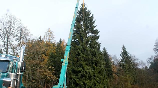 Vánoční strom z Pecky pro pražské Staroměstské náměstí.
