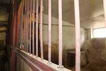 Žáci hořické zemědělské škole provádějí praxi na školním statku, kde se starají i o školní koně. Vedení školy nyní přichází s novou koncepcí, staré koně nahrazuje koňmi TJ Jiskra Hořice.