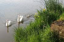 Od rybníku Bubňák.