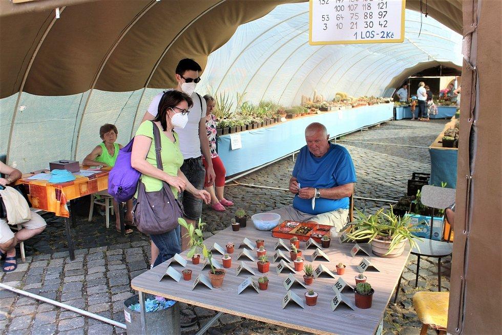 Týdenní výstavu kaktusů a sukulentů pořádá Klub kaktusářů. Na místě si mohou návštěvníci koupit vlastní kaktus, nebo jej zkusit vyhrát v tombole.