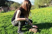 Zakrslí králíci zdolávají parkur jako koníci