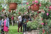 Ze zahrady manželů Suchardových v Újezdci, zaměřené především na pěstování fuchsií.
