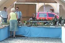 Výstava kaktusů na jičínském náměstí.