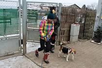 Venčení psů ze záchytné stanice pro psy.
