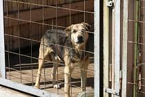 Psíci v jičínské záchytné stanici pro zaběhlé psy.