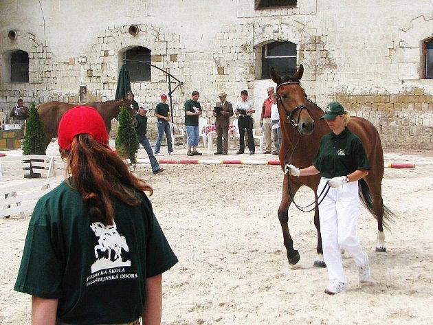 Přehlídka koní v areálu jezdecké školy Valdštejnská obora v Jičíně - Sedličkách.