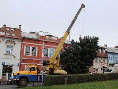 Vybrat ideální vánoční strom není jednoduché. Kromě samotného vzhledu rozhodují i technické podmínky těžby a dopravy.
