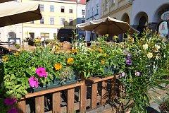 Do souboje květinových výzdob se zapojilo například i bistro U Střapaté Bohunky na hradeckém náměstí Míru.